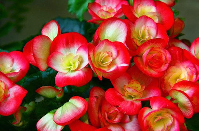 Bahçe Ve Balkonlar Için 10 Yaz çiçeği Yaşam Güncel Haberler