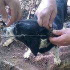 Sinop'ta tel örgüye takılan yavru köpek 3 gün sonra kurtarıldı
