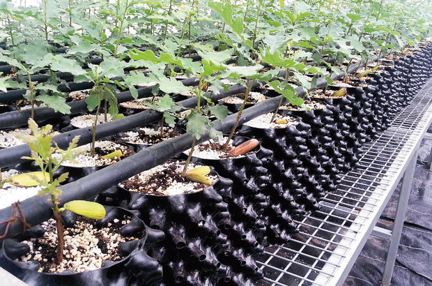 Orman ve Su İşleri Bakanlığı trüf aşılı 1200 fidan üretti