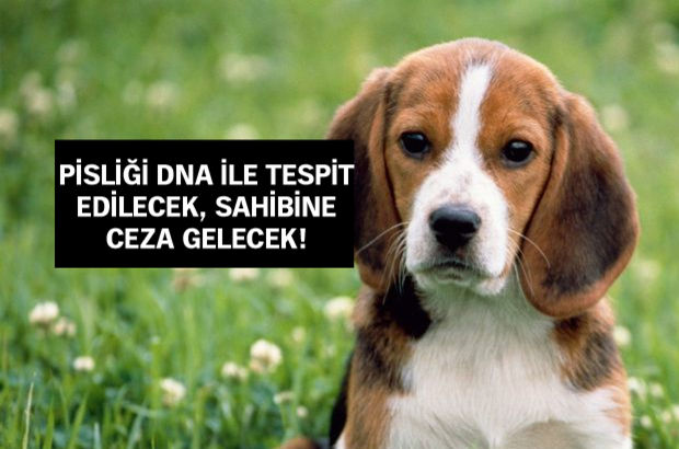 Fransa'da köpekler fişlenecek