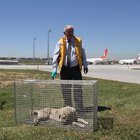 Atatürk Havalimanı'nda aprona giren köpekler için özel tim