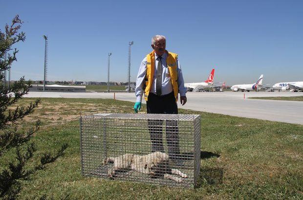 Havalimanına giren köpekler için özel tim kuruldu