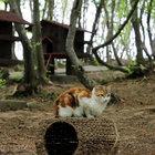 Samsun'da kediler için özel kasaba kuruldu!