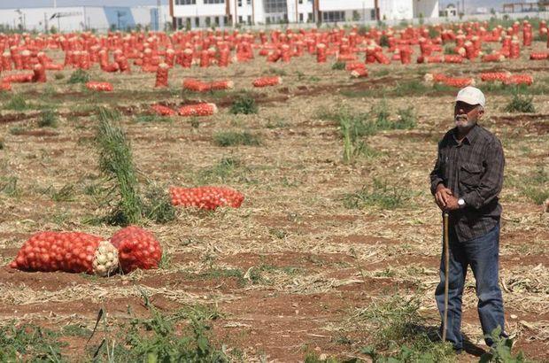 Adana'da 30 kuruşluk soğana 1500 TL maaşlı bekçi