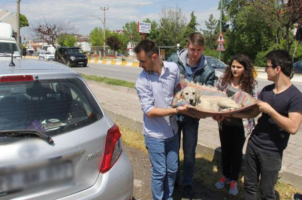 Edirne'de bir köpeğe otomobil çarptı