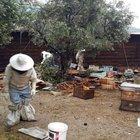 Aydın'da TIR devrildi, arılar otoyola saçıldı!