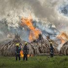 Filleri korumak için dişleri yakıldı