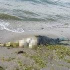 Kayıp balıkçı Sedat Türkücü'nün cesedi 9 ay sonra kıyıya vurdu