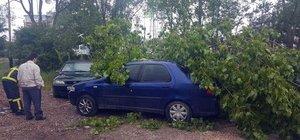 Kocaeli'de çürüyen ağaç devrildi