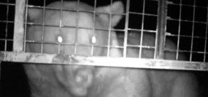 Trabzon'da arı kovanlarına dadanan ayı suçüstü görüntülendi