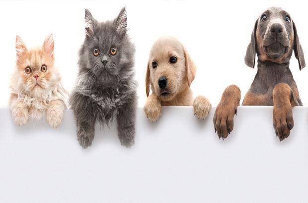 Evcil hayvan sahiplerine ücretli izin