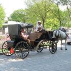 Montreal'de turist gezdiren faytonlar yasaklandı