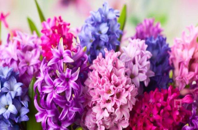 Hangi burç hangi çiçeği seviyor?