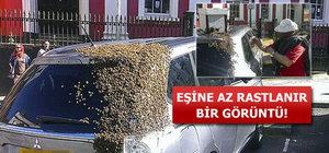 Kraliçe arı otomobilde sıkışınca...