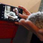 Suudi Arabistan'da hayvanlarla fotoğraf çekmek yasak