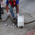 Tayland'da tuvalette piton dehşeti!