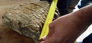 Kahramanmaraş´ta mamut çenesi kemiği bulundu
