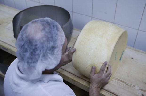Avrupa'nın peynirlerini Antalya'da üretiyor