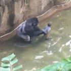 Goril aslında bebeği kurtarmak istemiş!