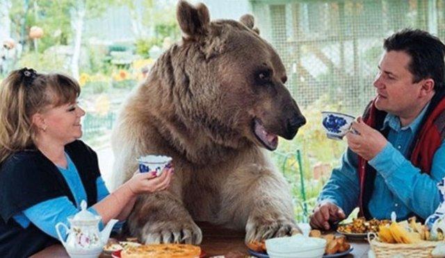 Svetlana ve Yuriy Panteleenko çifti, 136 kiloluk ayıyla beraber yaşıyorlar