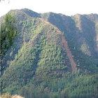 Muğla'da yaklaşık 10 bin hektarlık alan kendiliğinden yeşillendi