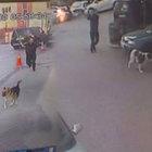 Kağıthane'deki Benek isimli köpek demir sopayla dövüldü