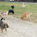 'Büyükçekmece'ye 15 ilçeden köpek atılıyor'