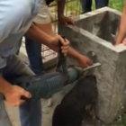 Zonguldak'ta beton çiçek saksısına sıkışan köpek kurtarıldı