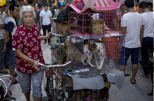 Çin'de vahşetin simgesi haline gelen geleneksel köpek eti festivali Yulin'de başladı