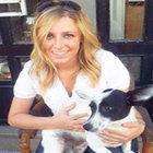 İETT'deki evcil hayvan krizine İBB, inceleme başlattı