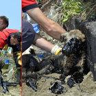 Zonguldak'ta bir köpek yavrusu zifte yapıştı