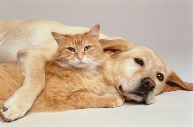 Kedi insanı ile köpek insanı arasındaki farklar neler?
