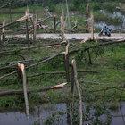 Çin'de fırtına: 98 ölü, yüzlerce yaralı
