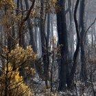Antalya yangınlarında 3 günlük ağır bilanço: 540 hektar orman, 26 ev yandı