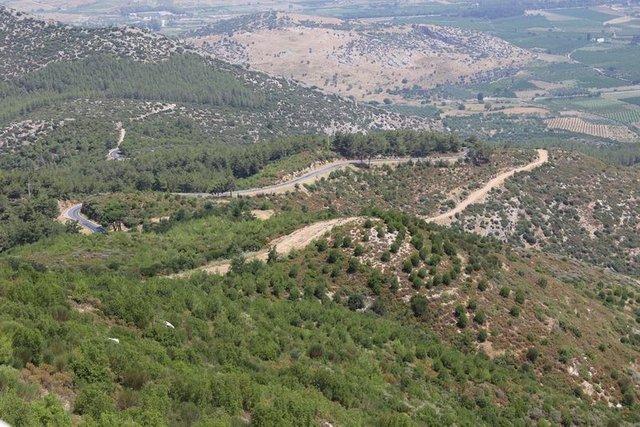 İzmir'in Bülbül Dağı 10 yıl sonra küllerinden doğdu
