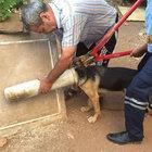 Mersin'de köpeğin kafası tuvalet borusuna sıkıştı