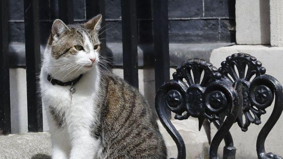 kedi larry