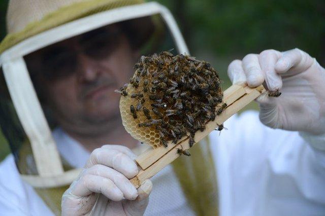 """Suni tohumlama ile """"güçlü arı"""" üretiyorlar"""