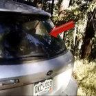 Kendini bagaja kilitleyen ayı, arabayı parçaladı!