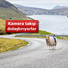 Faroe Adaları'nı koyunlarla görüntülüyor