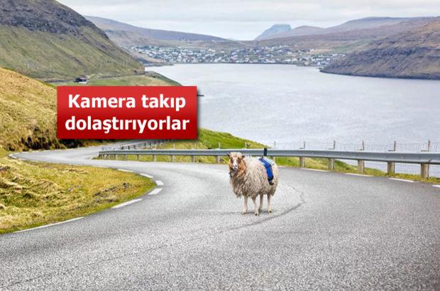 Google, Faroe Adaları