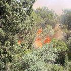 Gemlik´te orman yangını