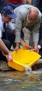 20 bin tane yavru balık derelere bırakıldı