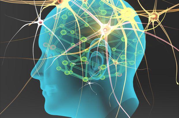 Sinir hücreleri kontrol edilerek hastalıklar iyileştirilecek!