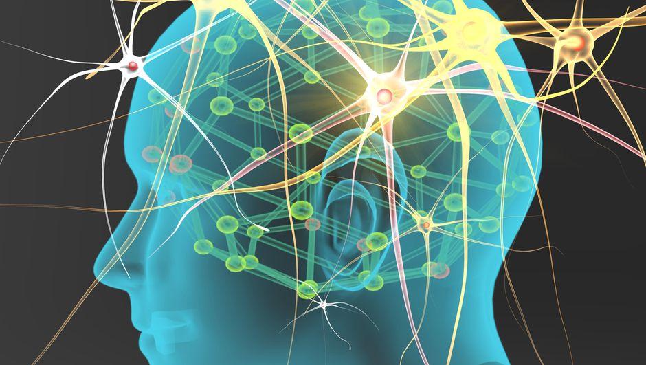 Sinir hücreleri