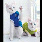 Rusya'da doğan ikiz kediler büyük ilgi görüyor