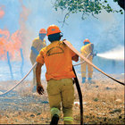 Muğla'da orman yangını: 3 ev yandı