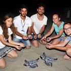 Caretta yavruları Patara'da Akdeniz'le buluşuyor