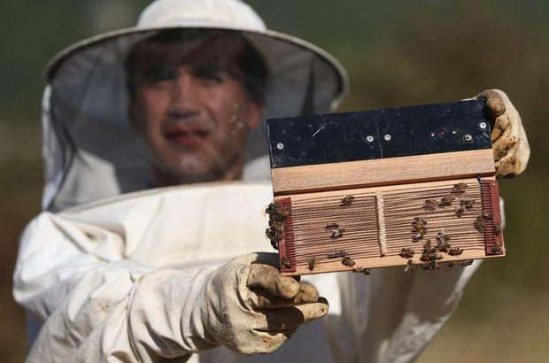 Arı zehiri