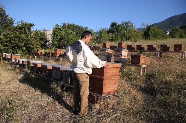 arı zehri